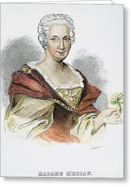 18th Century Greeting Cards - Anna Maria Sibylla Merian Greeting Card by Granger
