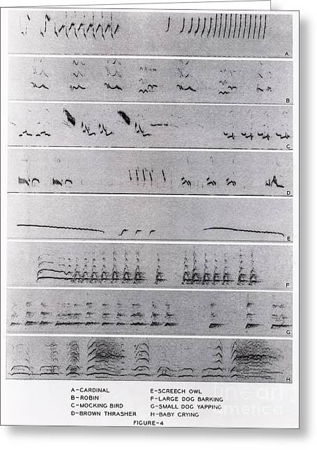 Crying Bird Greeting Cards - Audio Spectrograms Greeting Card by Omikron