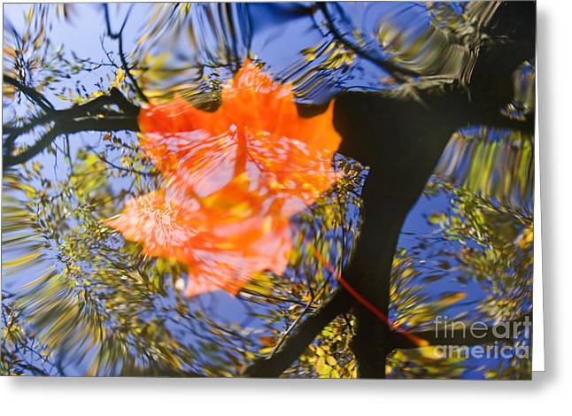 Blured Greeting Cards - Autumn Leaf On The Water Greeting Card by Michal Boubin