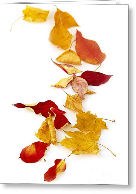 Various Greeting Cards - Autumn leaves Greeting Card by Elena Elisseeva