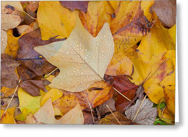 Red Fallen Leave Photographs Greeting Cards - Autumn Leaves Greeting Card by Hans Engbers