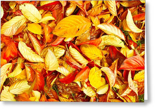 Fall Grass Greeting Cards - Autumn leaves Greeting Card by Tom Gowanlock