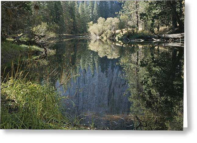 Woodland Scenes Greeting Cards - Autumn View Along The Merced River Greeting Card by Marc Moritsch