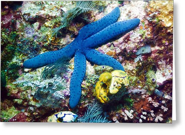 Star Fish Greeting Cards - Blue Linckia Starfish Greeting Card by Georgette Douwma
