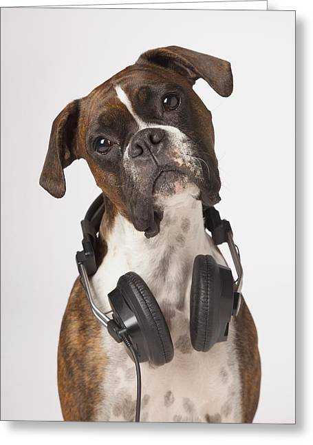 Headset Greeting Cards - Boxer Dog With Headphones Greeting Card by LJM Photo