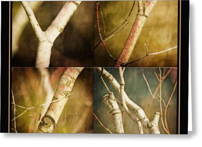 Branch Greeting Cards - Branching Out Greeting Card by Bonnie Bruno