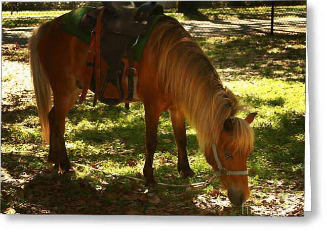 Pretty Scenes Greeting Cards - Brown horse Greeting Card by Blink Images
