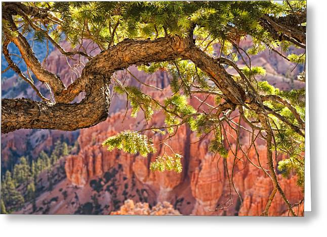 Douglas Fir Trees Greeting Cards - Bryce Canyon National Park Greeting Card by Utah Images