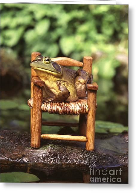 Bullfrog Greeting Card by Kenneth H Thomas and Photo Researchers