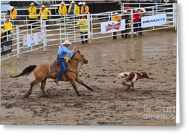 Throw Down Greeting Cards - Calf Roping at the Calgary Stampede Greeting Card by Louise Heusinkveld