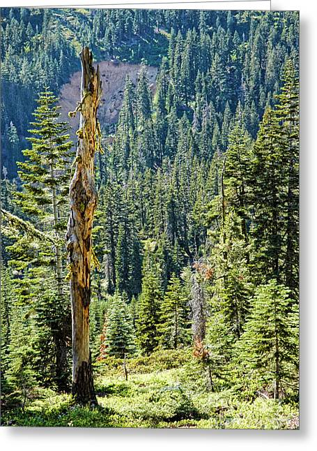 Rugged Mountains Greeting Cards - California Scenic Greeting Card by HD Connelly