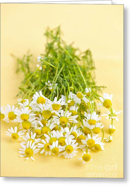 Medicinal Greeting Cards - Chamomile flowers Greeting Card by Elena Elisseeva