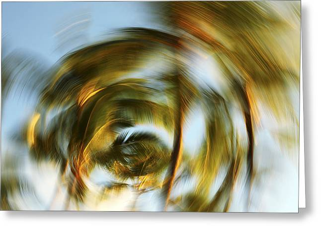 Vince Greeting Cards - Circular Palm Blur Greeting Card by Vince Cavataio - Printscapes