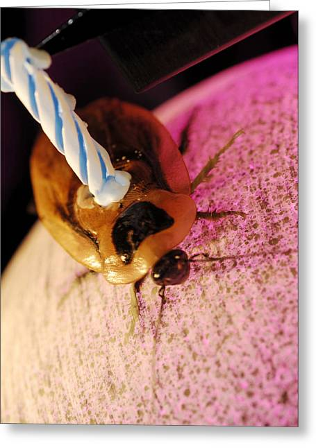 Roach Greeting Cards - Cockroach Locomotion Study Greeting Card by Volker Steger