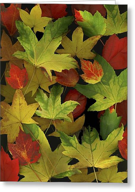 Colorful Autumn Leaves Greeting Card by Deddeda