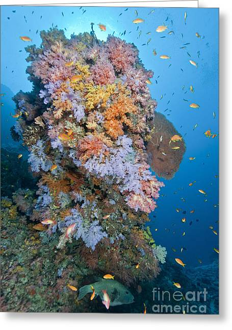 Pufferfish Greeting Cards - Colourful Reef Scene, Ari And Male Greeting Card by Mathieu Meur