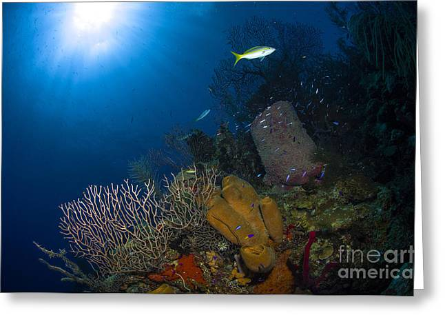 Reef Fish Greeting Cards - Coral And Sponge Reef, Belize Greeting Card by Todd Winner