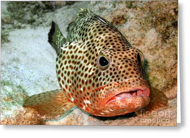 Aquarium Fish Greeting Cards - Coral Grouper Being Cleaned Greeting Card by Serena Bowles