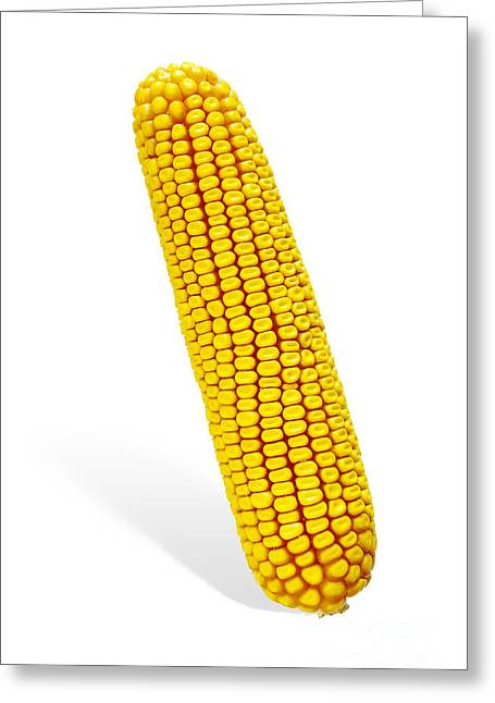 Corn Kernel Greeting Cards - Corn Cob Greeting Card by Carlos Caetano