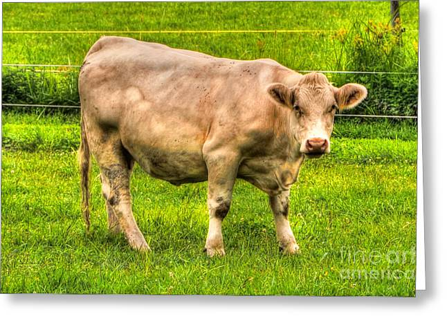 One Cow Greeting Cards - Cow Greeting Card by Mats Silvan