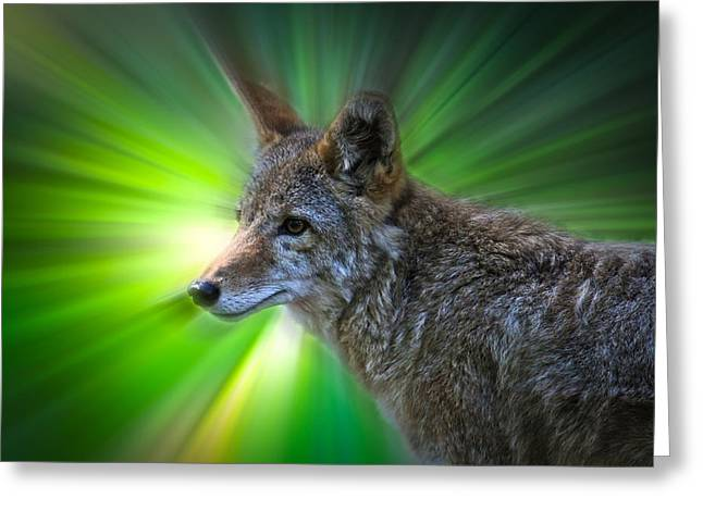Award Winning Art Greeting Cards - Coyote Greeting Card by Steve McKinzie