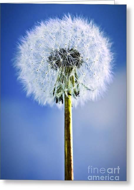 Soft Head Greeting Cards - Dandelion Greeting Card by Elena Elisseeva