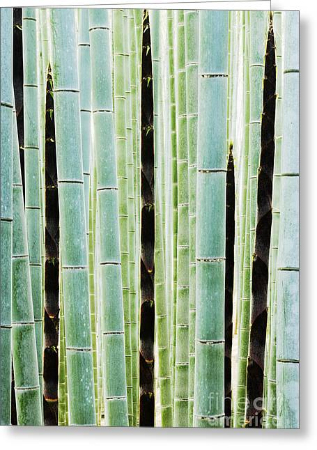 Over-exposed Greeting Cards - Detail of Bamboo in a Forest Greeting Card by Jeremy Woodhouse