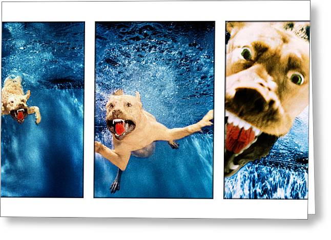 Underwater Dog Greeting Cards - Dog Underwater Series Greeting Card by Jill Reger