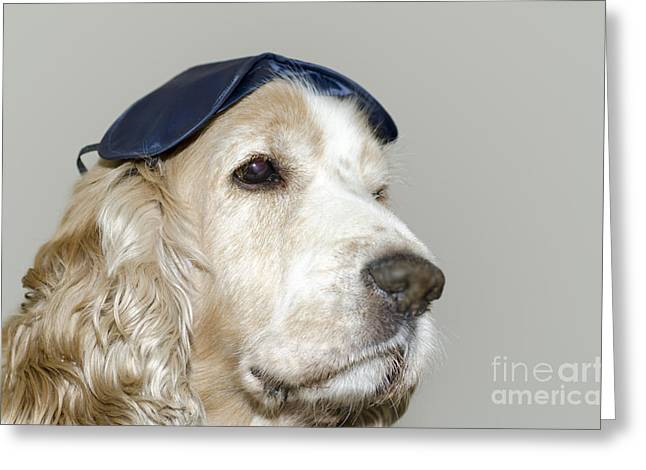 Tired On Bed Greeting Cards - Dog with a sleep mask Greeting Card by Mats Silvan