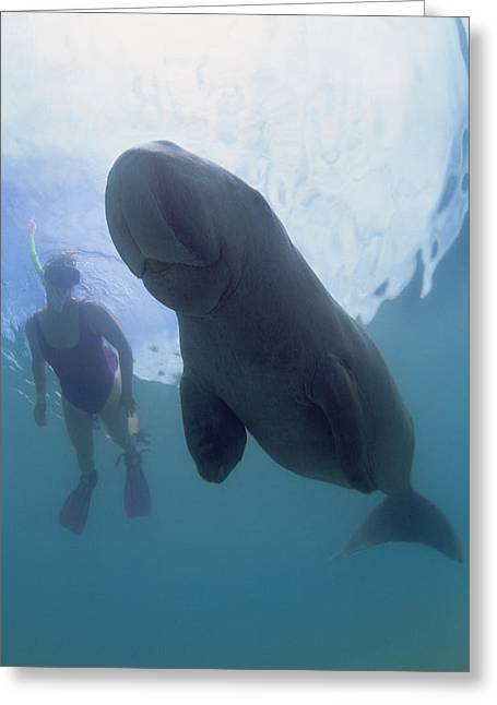 Snorkelling Greeting Cards - Dugong Greeting Card by Louise Murray