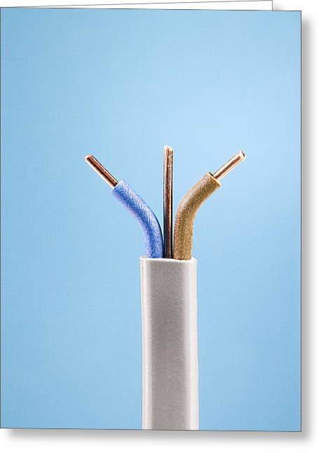 Neutral Colours Greeting Cards - Electrical Cable Greeting Card by Sheila Terry