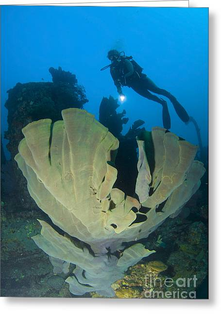 Siliceous Greeting Cards - Elephant Ear Sponge Attached Greeting Card by Steve Jones