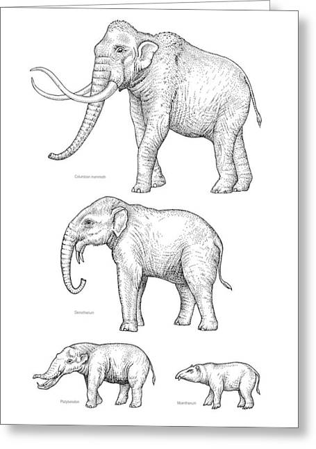 Lineage Greeting Cards - Elephant Evolution, Artwork Greeting Card by Gary Hincks