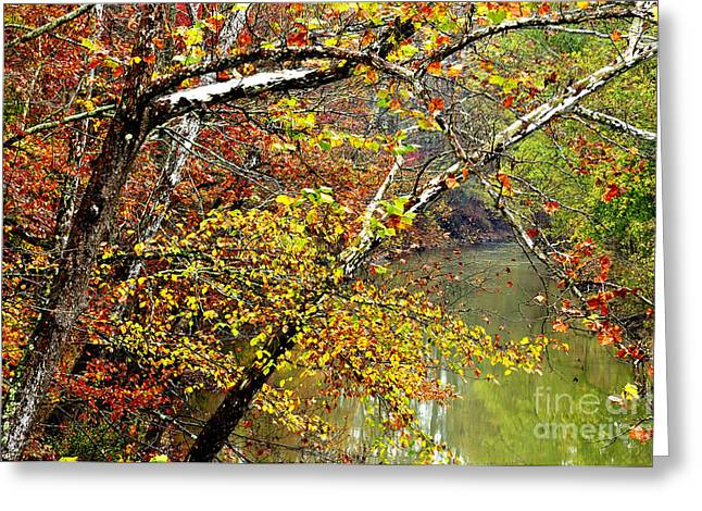 West Fork Greeting Cards - Fall along West Fork River Greeting Card by Thomas R Fletcher