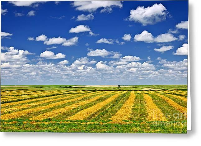 Farm field at harvest in Saskatchewan Greeting Card by Elena Elisseeva