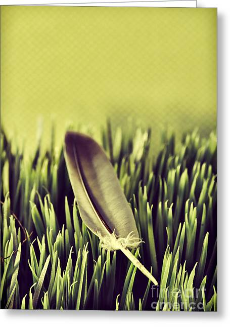 Vintage Beauty Greeting Cards - Feather Greeting Card by HD Connelly
