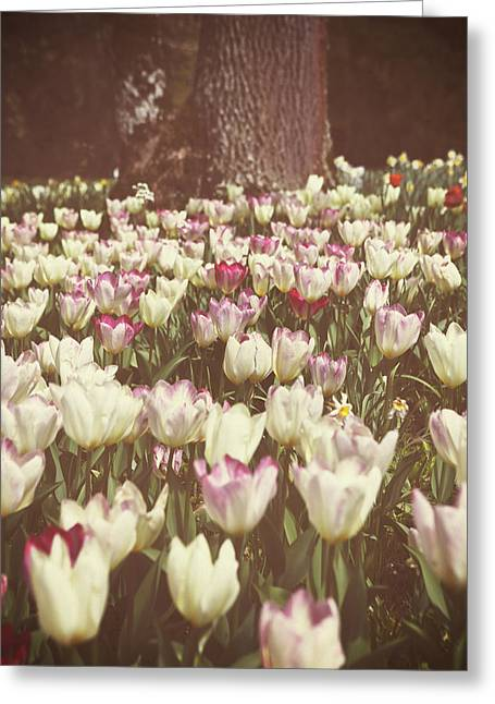 Beautiful Flowering Trees Greeting Cards - Field Of Tulips Greeting Card by Joana Kruse