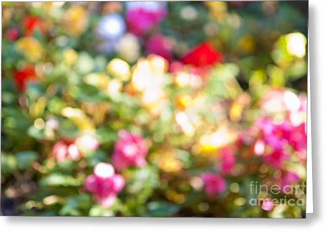 Colorful Blooms Greeting Cards - Flower garden in sunshine Greeting Card by Elena Elisseeva