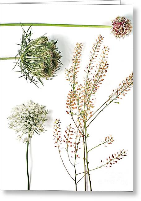 Green Chives Greeting Cards - Flowers Greeting Card by HD Connelly