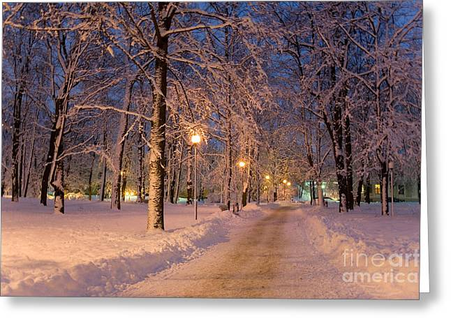 Gi Greeting Cards - Frozen Path Through Trees Greeting Card by Jaak Nilson