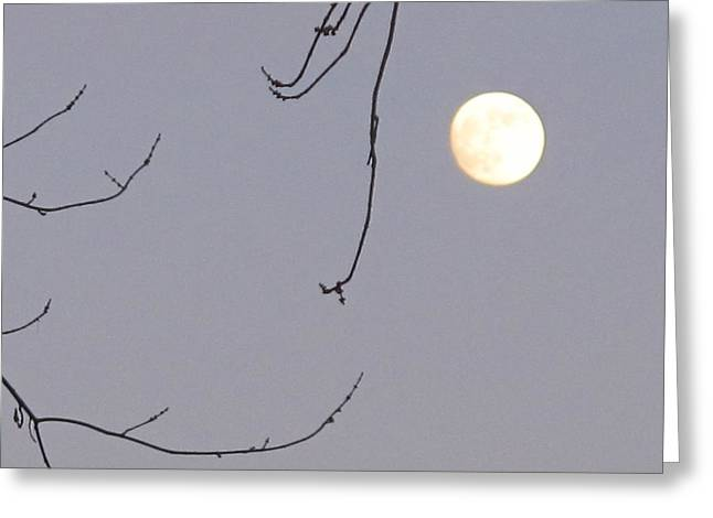 Planet Pyrography Greeting Cards - Full Moon Greeting Card by Valia Bradshaw