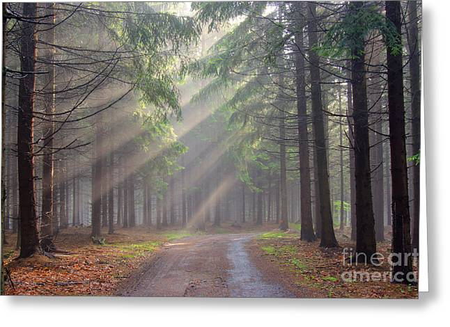 Morning Mist Greeting Cards - God beams - coniferous forest in fog Greeting Card by Michal Boubin
