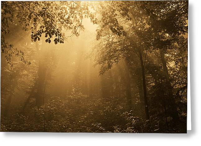 Evil Place Greeting Cards - Golden forest Greeting Card by Odon Czintos