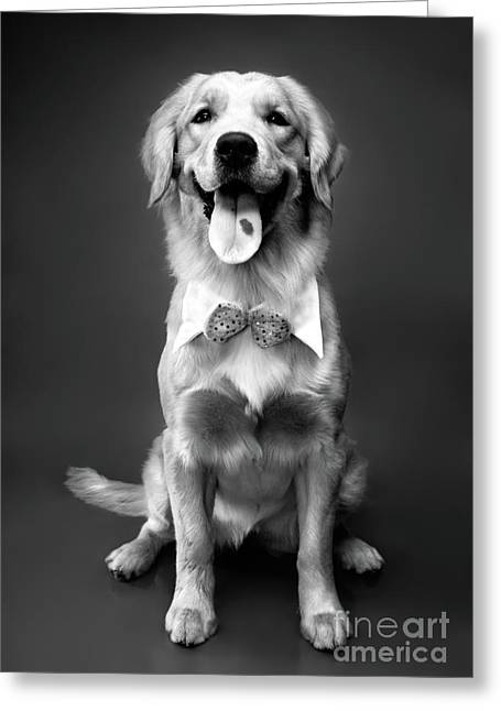 Furry Coat Greeting Cards - Golden Retriever Greeting Card by Oleksiy Maksymenko