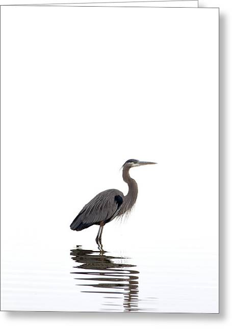 Jason Smith Greeting Cards - Great Blue Heron Greeting Card by Jason Smith