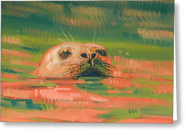 Harbor Seals Greeting Cards - Harbor Seal Greeting Card by Donald Maier