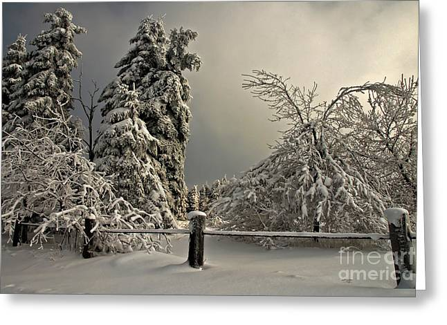 Christmas Greeting Photographs Greeting Cards - Heavy Laden Greeting Card by Lois Bryan