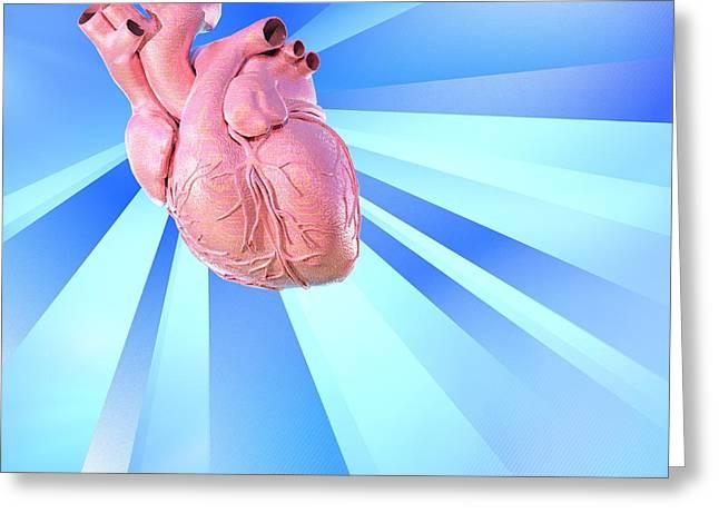 Biomedical Illustration Greeting Cards - Human Heart, Artwork Greeting Card by Laguna Design