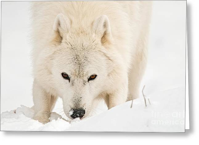Animal Pics Greeting Cards - I See You Greeting Card by Michael Cummings