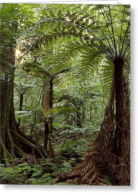 Tropical Photographs Greeting Cards - Jungle Greeting Card by Les Cunliffe